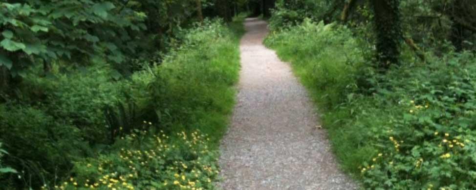 warrenscourt-woods